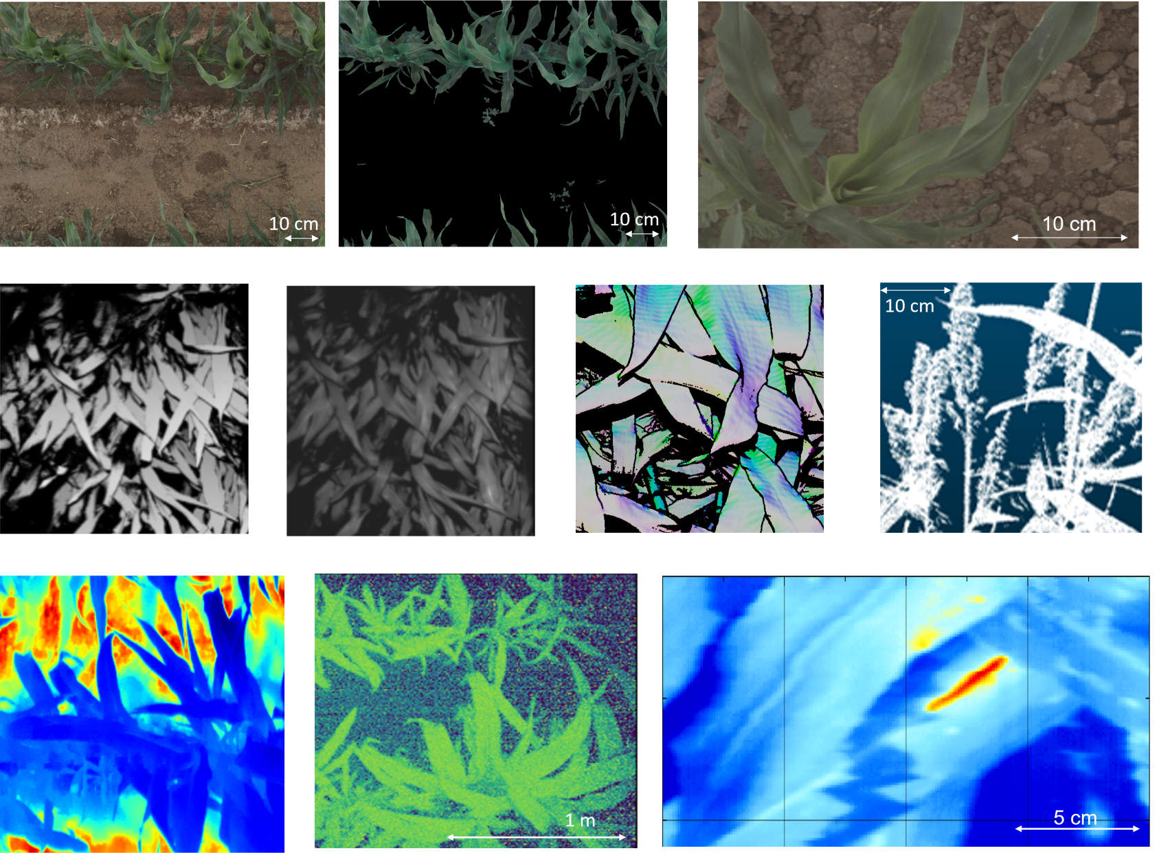 examples of TERRA REF image, point cloud, and hyperspectral data