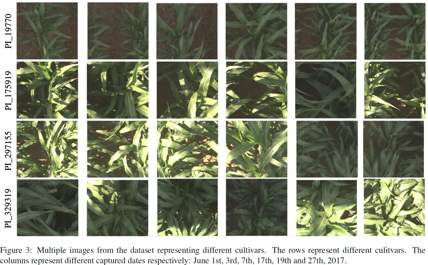Multiple images from the dataset representing different cultivars. The rows represent different culitvars. The columns represent different captured dates respectively: June 1st, 3rd, 7th, 17th, 19th and 27th, 2017.