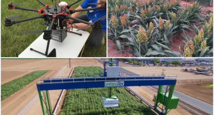 Crops get the high tech treatment with the world's largest robotic field scanner is operational at the University of Arizona's Maricopa Agricultural Center (MAC).